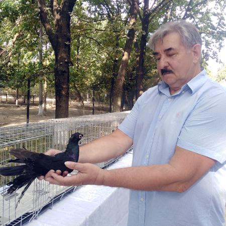 Выставка голубей, г.Шымкент, 6.08.2019г.